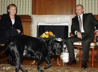 Chancellor S Dogs Terrorised By Larry The Cat