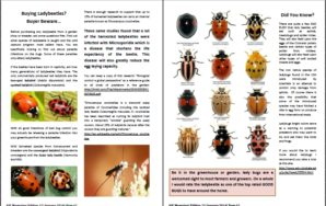 Are Ladybugs beneficial for Your Aquaponics System?