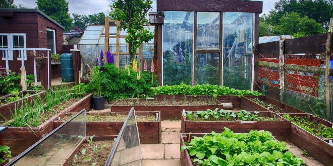 tips to organizing your backyard with a greenhouse groundreport