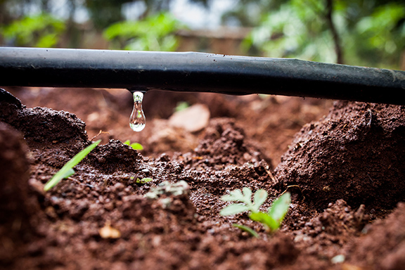 Photo-by-Fintrac-Drip-Irrigation-Technology-is-a-Solution-for-Many-Smallholder-Farmers.jpg