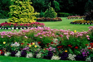 11 Tips for Cutting down Landscaping Costs