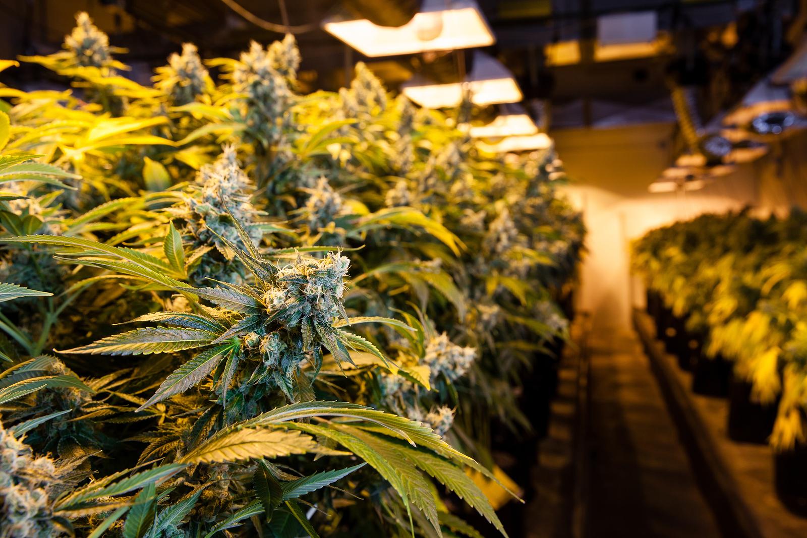 Marijuana Legal In Bars And Restaurants
