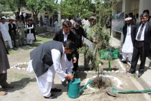 Session Judge plants Deodar Sapling in Court