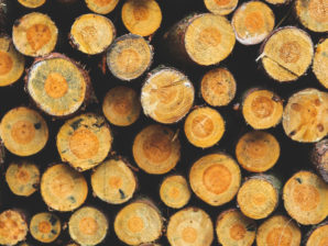 The Deforestation Crisis Is Worse Than You Think