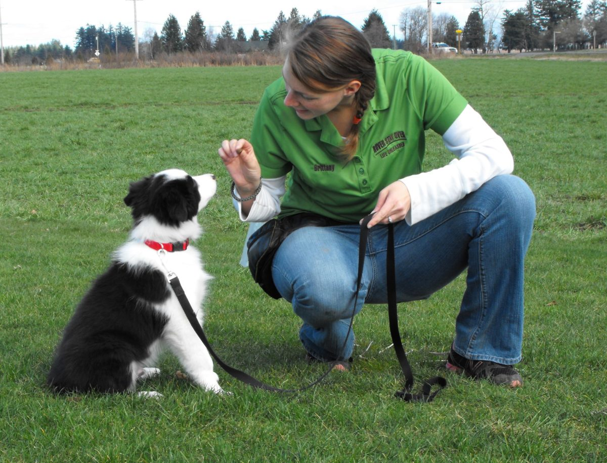 Dog Grooming Services At Petco