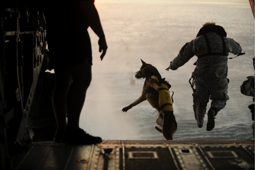Image Result For Pakistan Army Dog