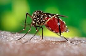 A Massive Three Day Dengue Inspection Campaign  (Western Provincr]To Be Started  From Tomorrow