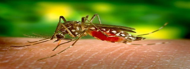 Dengue fever is a viral illness caused by a virus that is transmitted by mosquitoes. (Picture Source: www.thesparmanclinic.com)