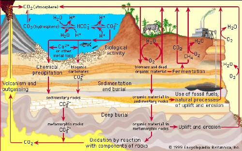 EarthCarbonCycle