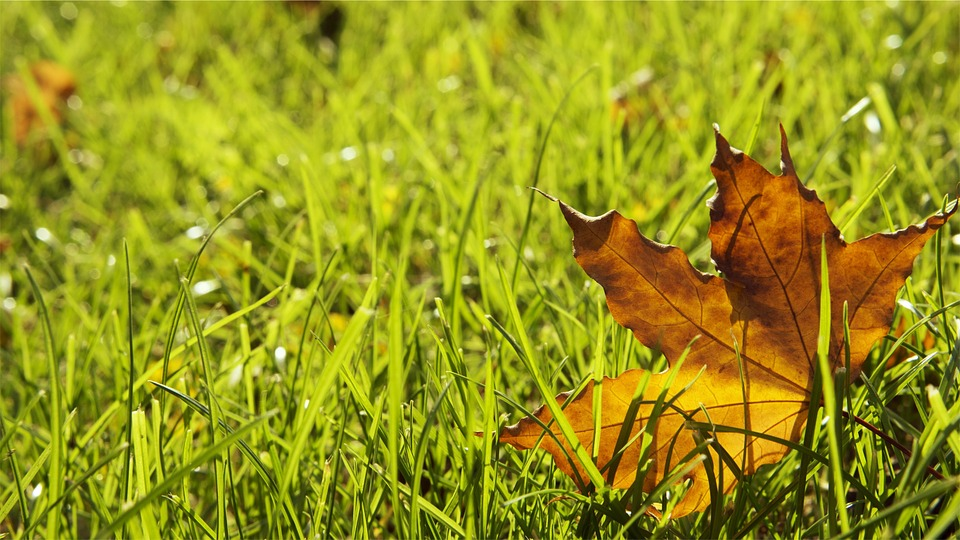 grass-698649_960_720 (1)