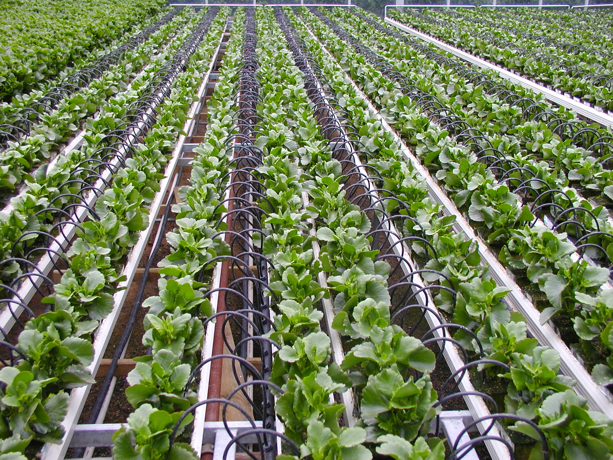 Increasing Crop Production By Using Drip Irrigation System
