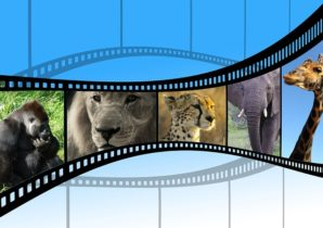 How Explainer Videos Can Improve Conversion Rates