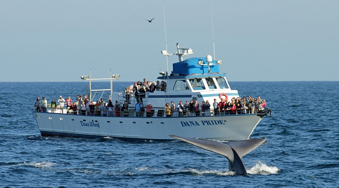 whale-watching-san-diego