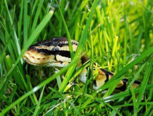 Tips on Treating Snake Bites in the Wild