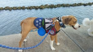 Police Officer and Veteran to Receive Service Dogs from Paws of War
