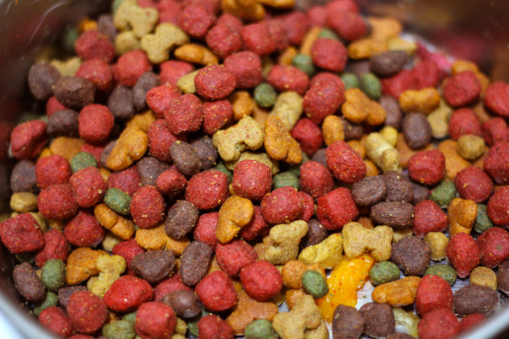 Basic Guidelines To Pick The Best Food For Your Dog