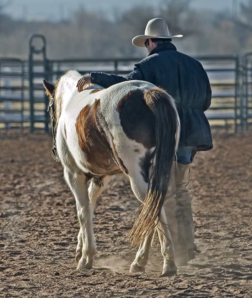 Ranching has been in Crowe's family for generations