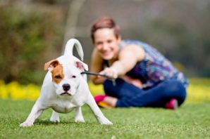 5 Factors to Keep in Mind before Becoming a Pet Owner