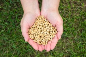 Benefits of Natural Cat Litter