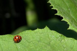 Biological Control May Beget Exotic Invaders